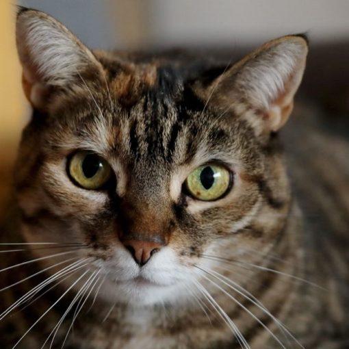 5 livres pour comprendre les chats