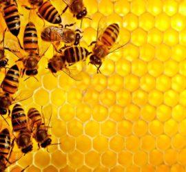 5 livres pour débuter en apiculture