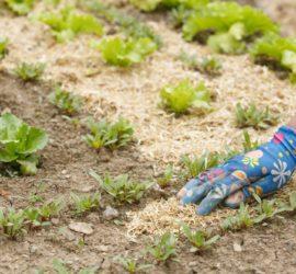 5 livres pour débuter en permaculture