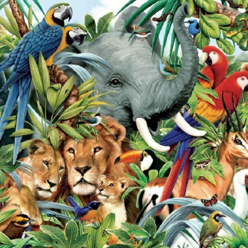 5 livres pour découvrir les animaux