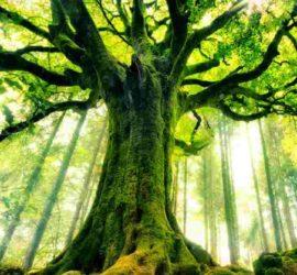5 livres pour identifier les arbres