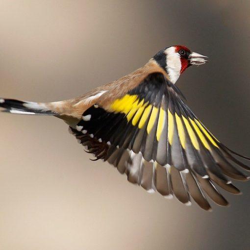 5 livres pour identifier les oiseaux