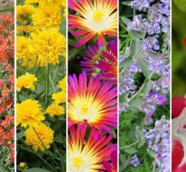 5 livres pour identifier les plantes