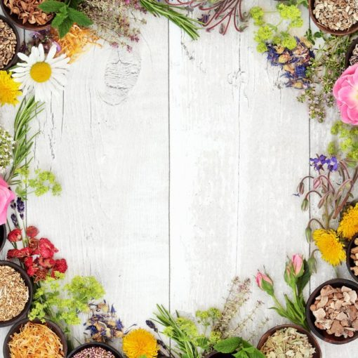 5 livres pour se soigner par les plantes