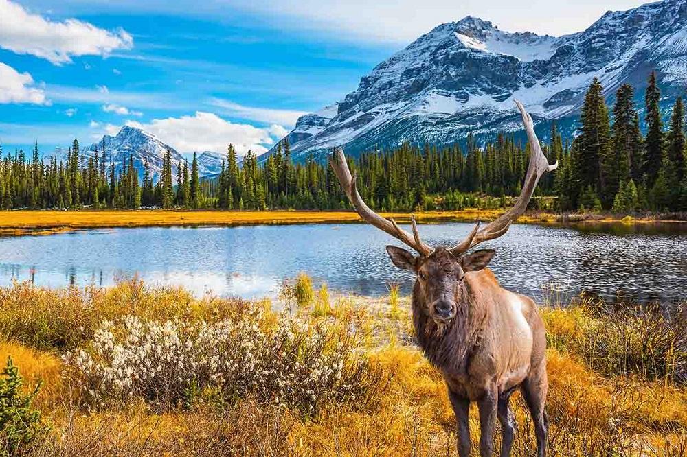 5 livres pour visiter le Canada