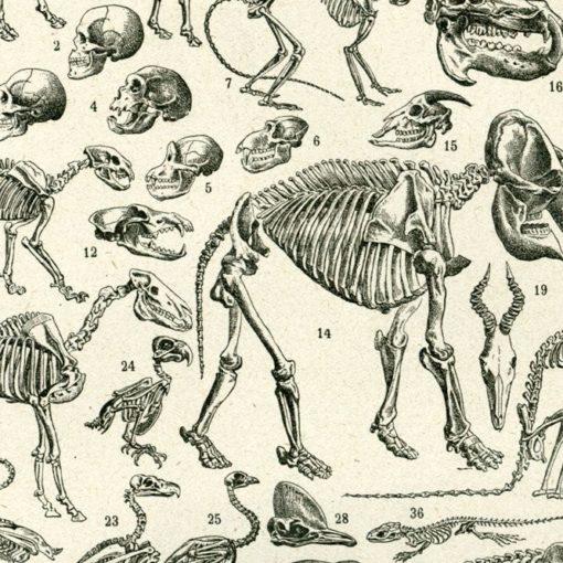 Les 5 meilleurs livres d'anatomie animale