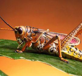 Les 5 meilleurs livres d'entomologie
