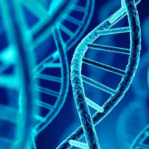 Les 5 meilleurs livres sur la génétique