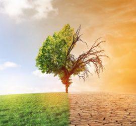 Les 5 meilleurs livres sur le changement climatique