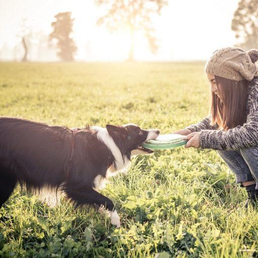 Les 5 meilleurs livres sur le comportement du chien