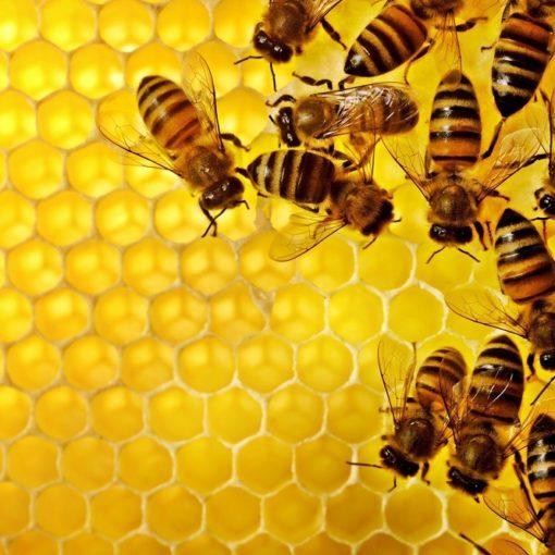 Les 5 meilleurs livres sur les abeilles