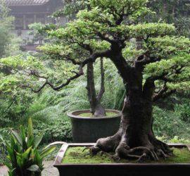 Les 5 meilleurs livres sur les bonsaïs