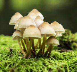 Les 5 meilleurs livres sur les champignons