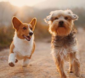 Les 5 meilleurs livres sur les chiens