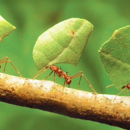 Les 5 meilleurs livres sur les fourmis