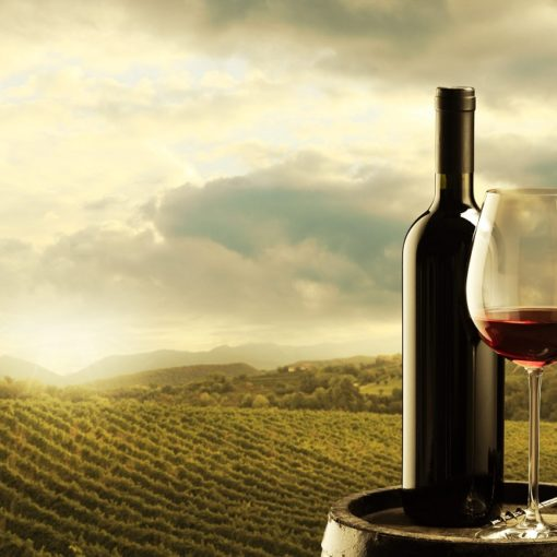 Les 5 meilleurs livres sur les vins de Bourgogne