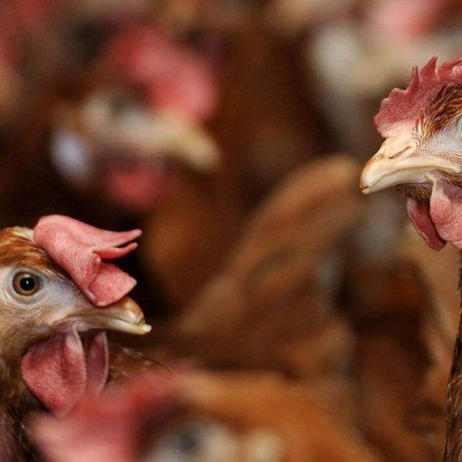 Les 5 meilleurs livres sur l'élevage de poules