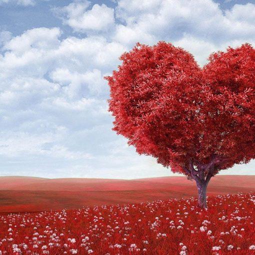 Les 5 meilleurs livres sur l'amour
