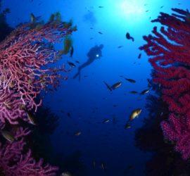 Les 5 meilleurs livres sur la plongée sous-marine