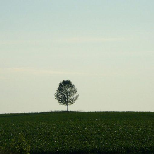 Les 5 meilleurs livres sur la solitude