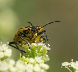 Les 5 meilleurs livres sur les insectes