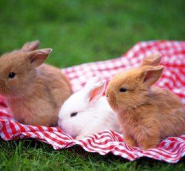 Les 5 meilleurs livres sur les lapins nains