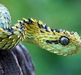 Les 5 meilleurs livres sur les serpents