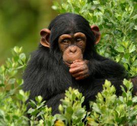 Les 5 meilleurs livres sur les singes