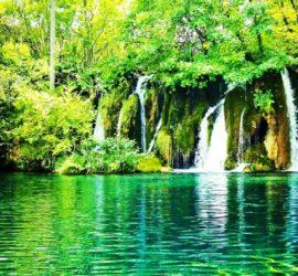 5 excellents livres à offrir à un(e) amoureux (se) de la nature (idées cadeaux)