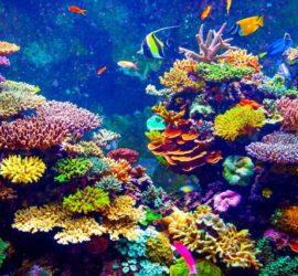Les 5 meilleurs livres de biologie marine