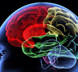 Les 5 meilleurs livres de neuroanatomie