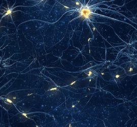 Les 5 meilleurs livres de neurobiologie