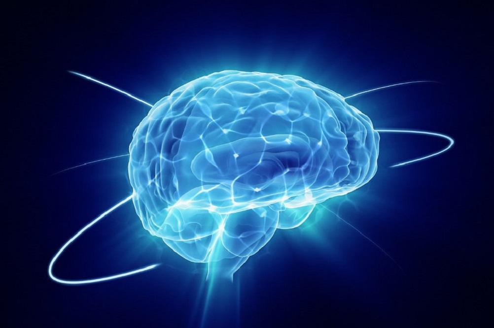 Les 5 meilleurs livres de neurologie
