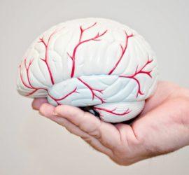 Les 5 meilleurs livres sur l'AVC (Accident Vasculaire Cérébral)