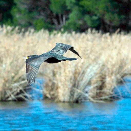 Les 5 meilleurs livres sur l'ornithologie
