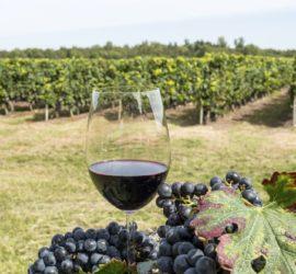 Les 5 meilleurs livres sur la viticulture