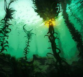 Les 5 meilleurs livres sur les algues