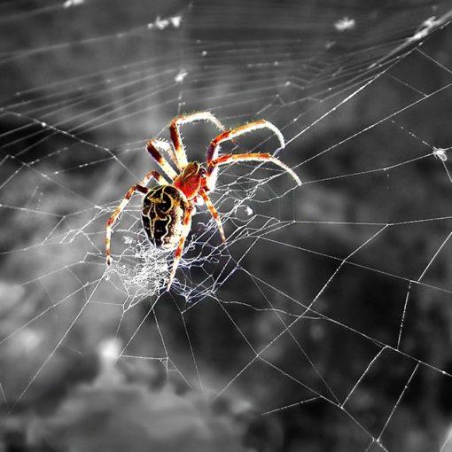 Les 5 meilleurs livres sur les araignées