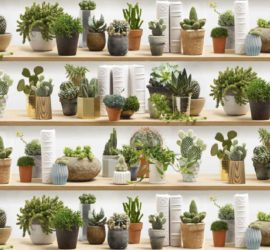 Les 5 meilleurs livres sur les cactus