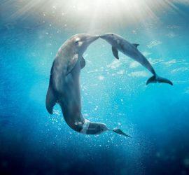 Les 5 meilleurs livres sur les dauphins