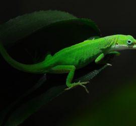 Les 5 meilleurs livres sur les geckos