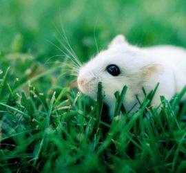 Les 5 meilleurs livres sur les hamsters