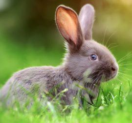 Les 5 meilleurs livres sur les lapins
