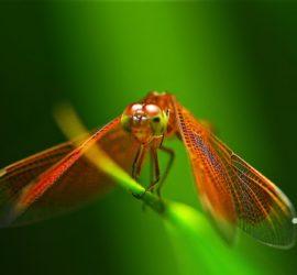 Les 5 meilleurs livres sur les libellules