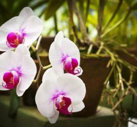Les 5 meilleurs livres sur les orchidées