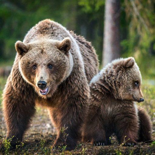 Les 5 meilleurs livres sur les ours