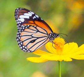 Les 5 meilleurs livres sur les papillons