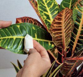 Les 5 meilleurs livres sur les plantes d'intérieur
