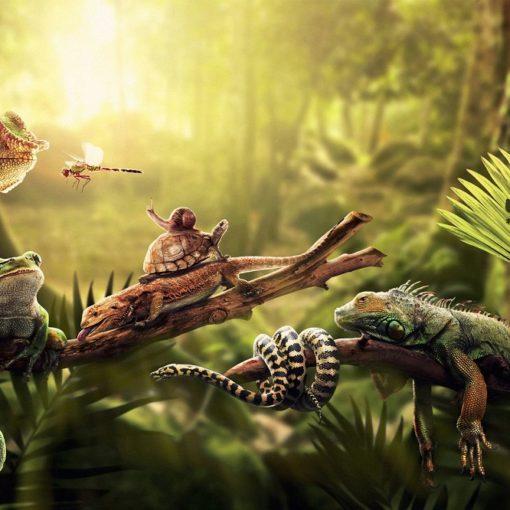 Les 5 meilleurs livres sur les reptiles