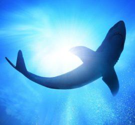Les 5 meilleurs livres sur les requins